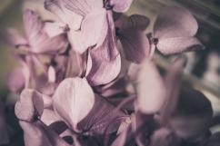 Martyn and Tamara - Feb 2018 - Shades of White Photography-6